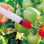 ГМО – генно модифицирани организми – официално разрешената отрова!
