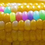 Какво представляват генетично модифицираните организми и вредни ли са? – интервю на БНТ с проф.Иво Кременски