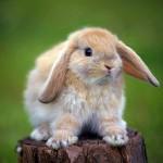 Зайче или ябълка?